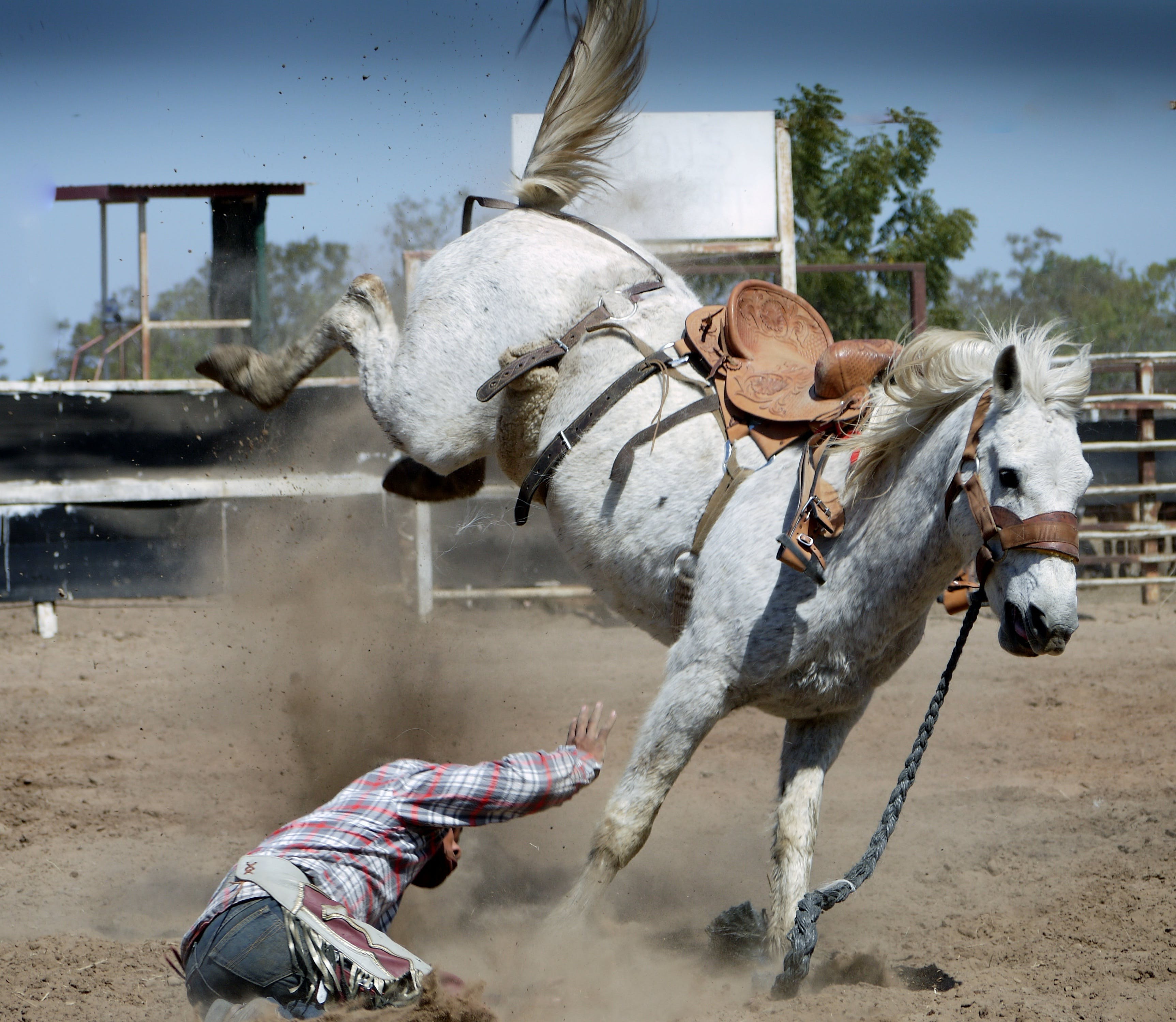 White Horse Kicking While Man on Ground