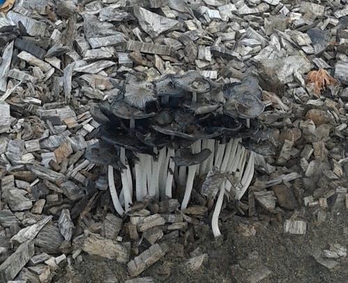 Free stock photo of mushrooms