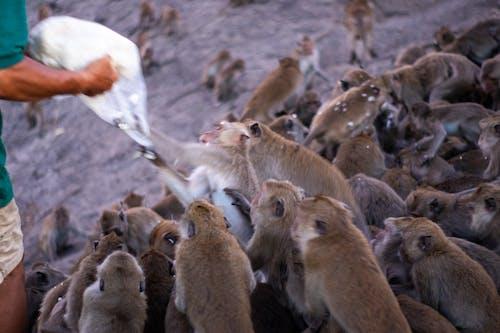 Imagine de stoc gratuită din acțiune, animale, faună sălbatică, furie