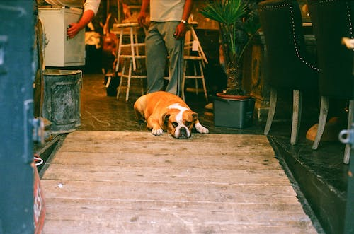 Free stock photo of 35mm, 35mm film, analog photography, dog