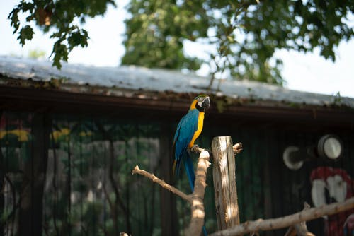Blue Yellow and Green Parrot on Brown Wooden Stick