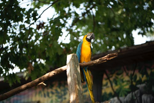 Blue Yellow and Green Macaw on Brown Wooden Stick