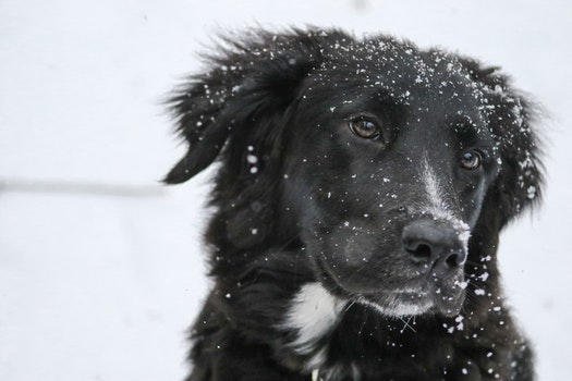 Free stock photo of snow, winter, animal, dog