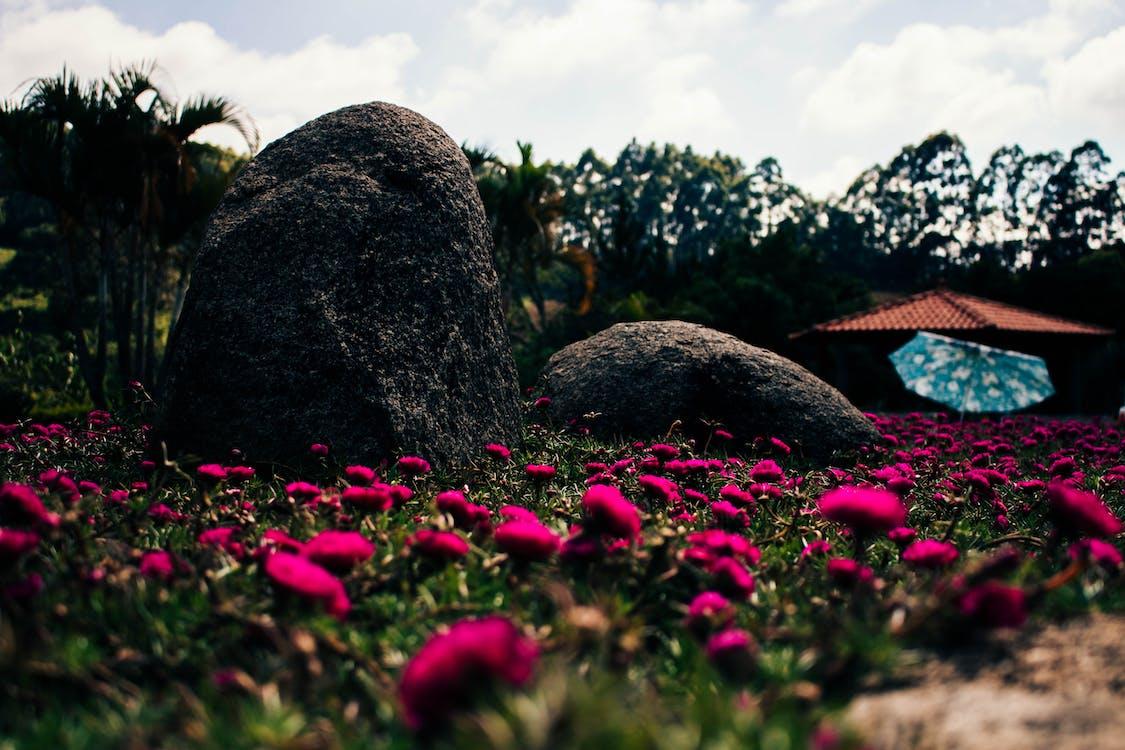 Fotobanka sbezplatnými fotkami na tému Brazília, krásny, kvet