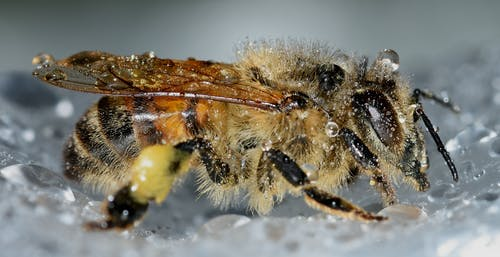 arı, böcek, çiy, damla içeren Ücretsiz stok fotoğraf