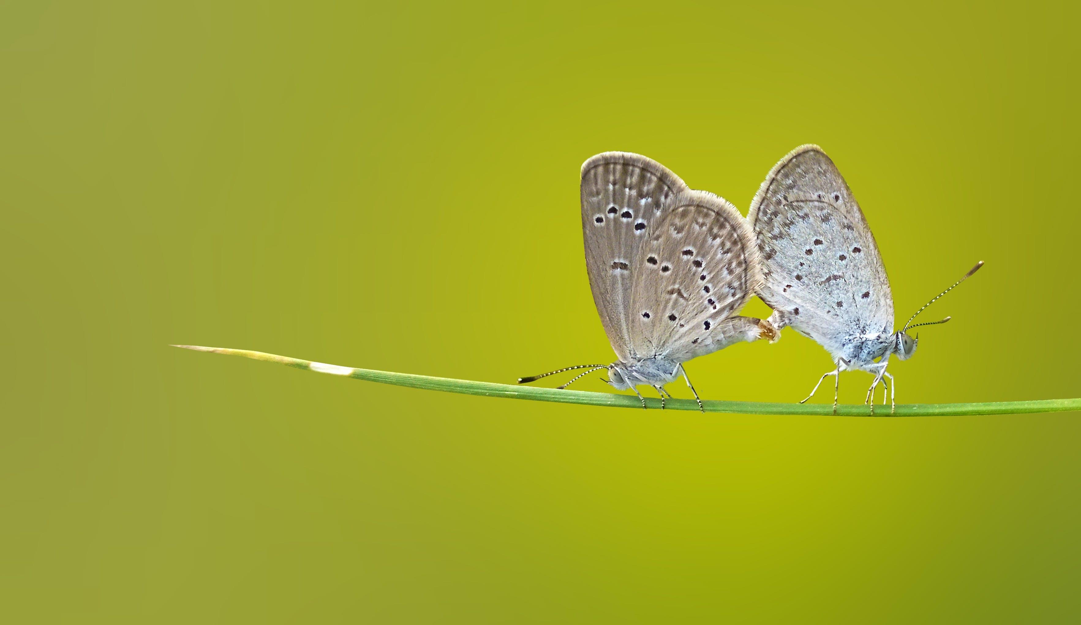 Kostenloses Stock Foto zu fauna, insekten, natur, rasse