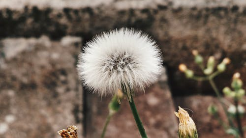 Gratis lagerfoto af blomst, close-up, farve, flora