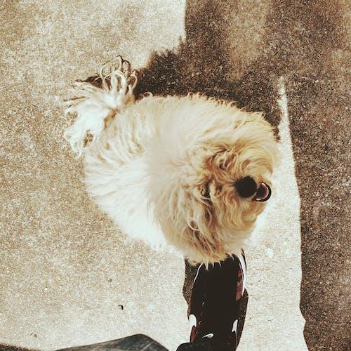 Δωρεάν στοκ φωτογραφιών με γλυκούλι, κανίς, σκύλος