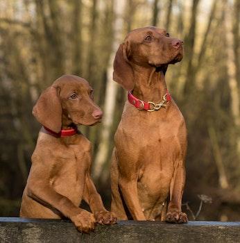 Kostenloses Stock Foto zu niedlich, tiere, hunde, haustiere