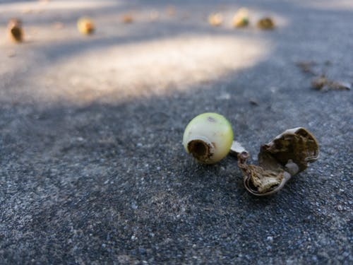 Free stock photo of acorn, concrete, macro