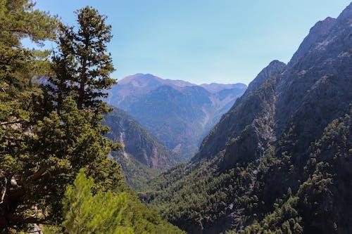 Imagine de stoc gratuită din arbori, creta, drumeție, Grecia