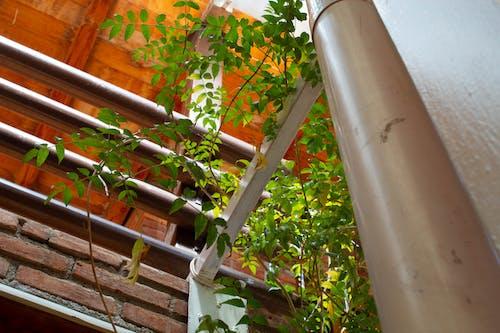 植物, 特寫焦點 的 免費圖庫相片