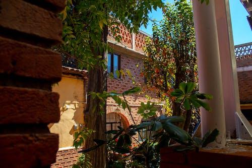 專注, 旅館, 樹木, 磚建築 的 免費圖庫相片