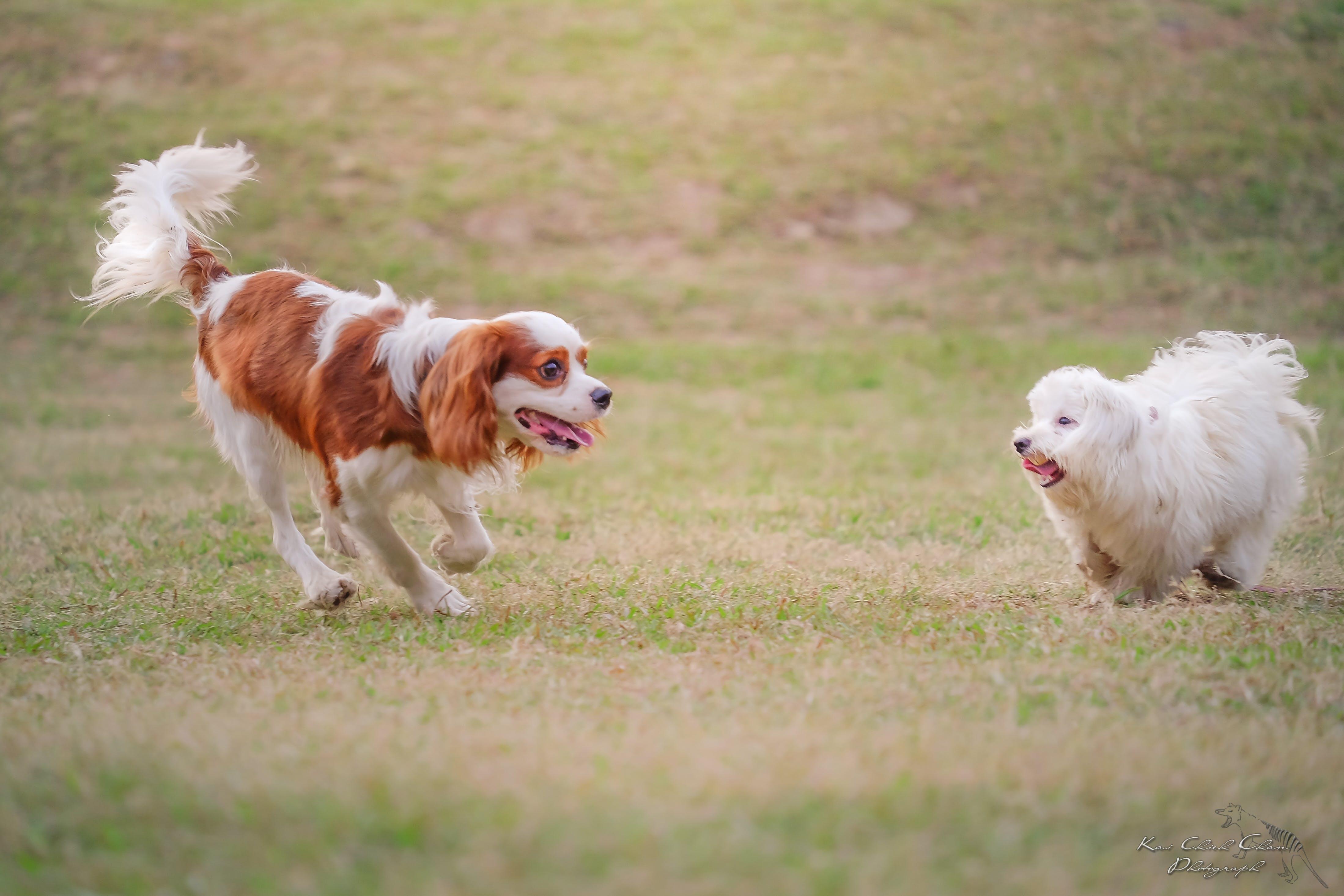 Kostenloses Stock Foto zu ç‹—, freunde, hund, hunde