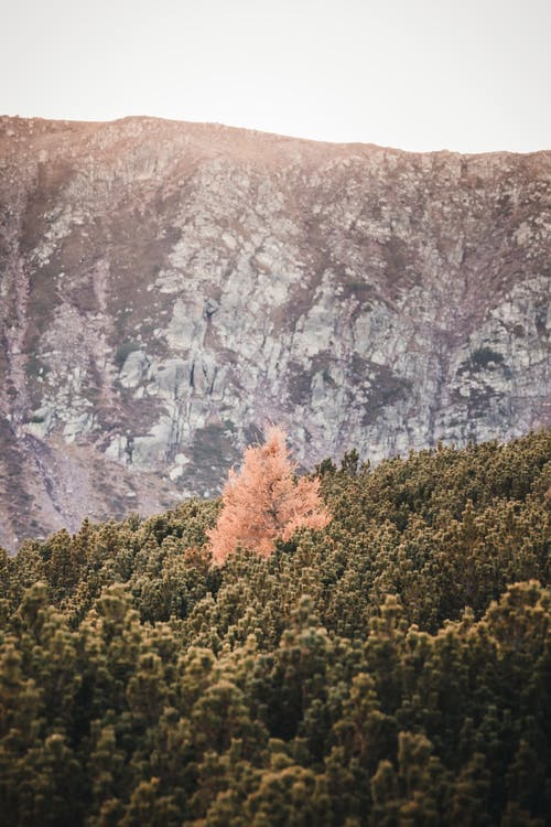 Free stock photo of alps, autumn, autumn color, autumn colors