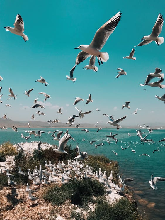 Photo of Flock of Seagulls Flying