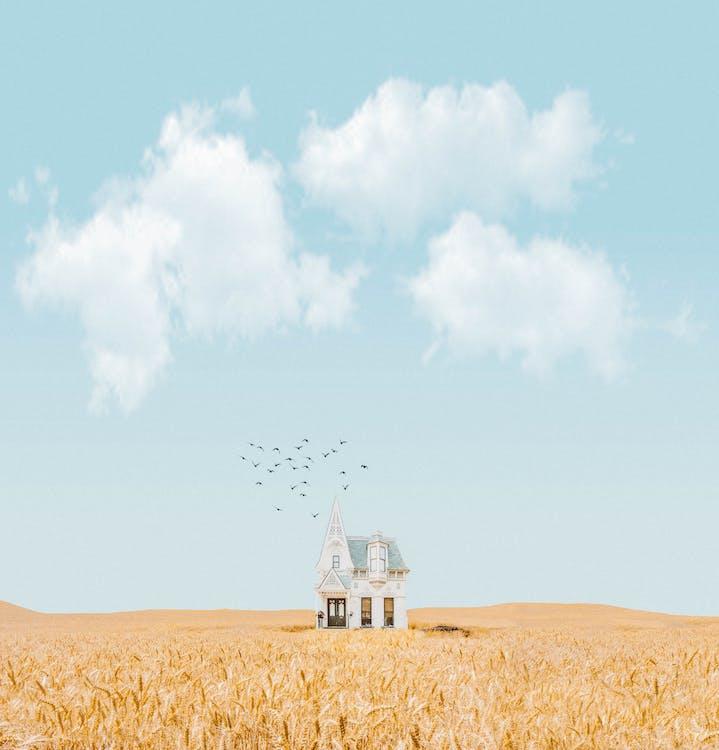 agrícola, agricultura, ao ar livre