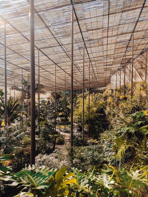 คลังภาพถ่ายฟรี ของ การเจริญเติบโต, พฤกษชาติ, พฤกษา, พืชผักใบเขียว