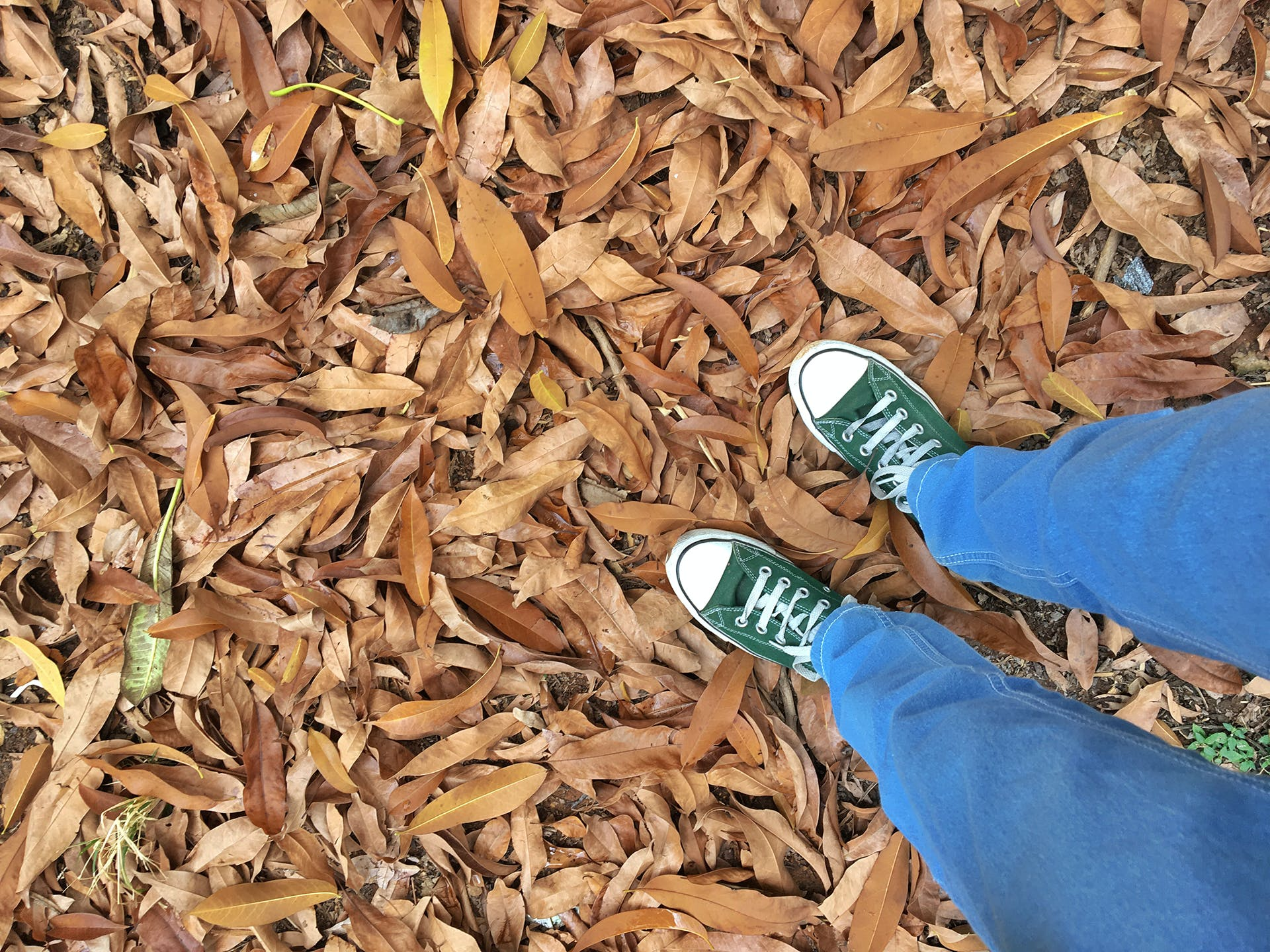 Free stock photo of autumn leaves, blue jeans, botanical, canvas shoes