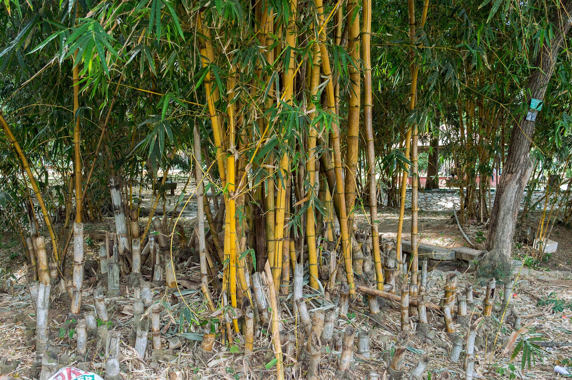 Free stock photo of bamboo, botanical, botanical garden, environment