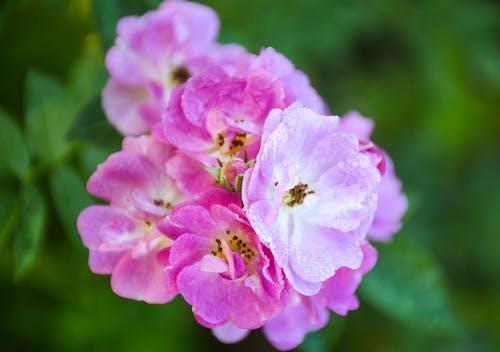 Ingyenes stockfotó botanikus, gyönyörű virágok, HD-háttérkép, szabadtéri témában