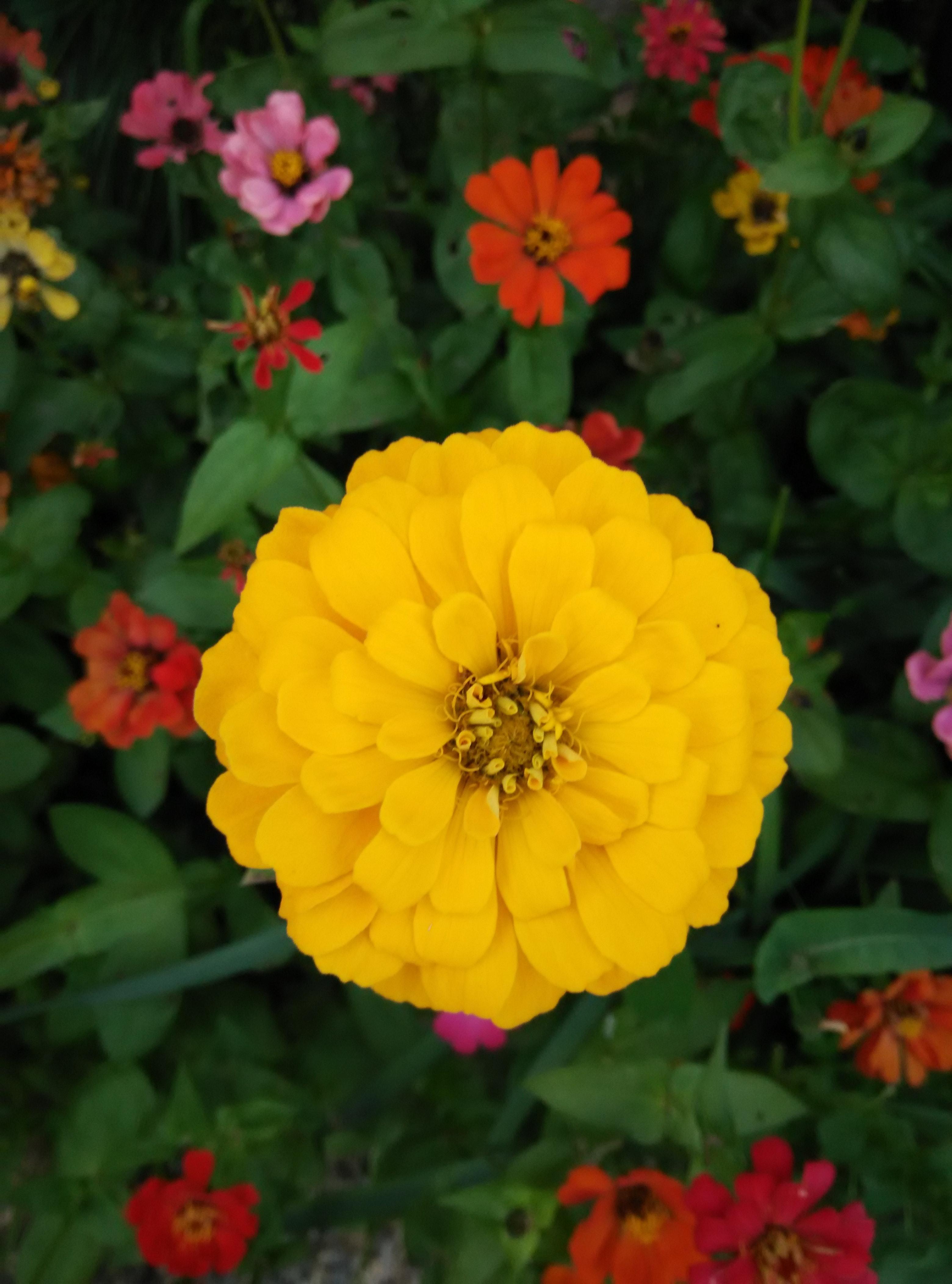 Free Stock Photo Of Beautiful Flowers Nature Nikon