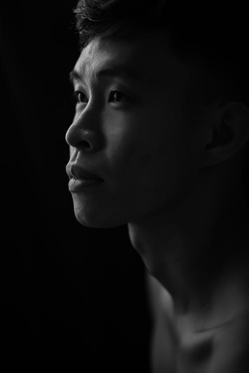 Gratis stockfoto met close-up, daglicht, fel, hoofdschot