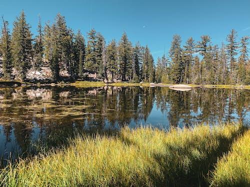 反射, 山湖, 木, 水の無料の写真素材