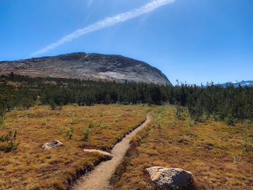 トレイル, ハイキング, ヨセミテ, より少ない道の無料の写真素材