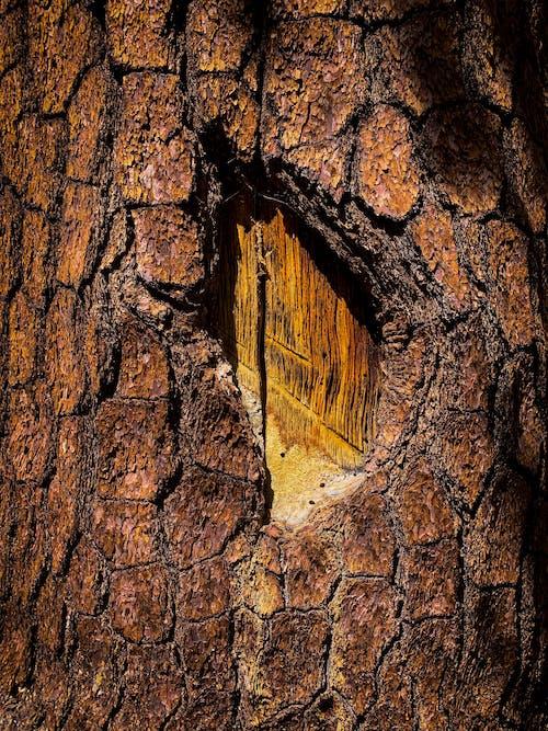 パターン, 木材, 樹皮, 自然の無料の写真素材
