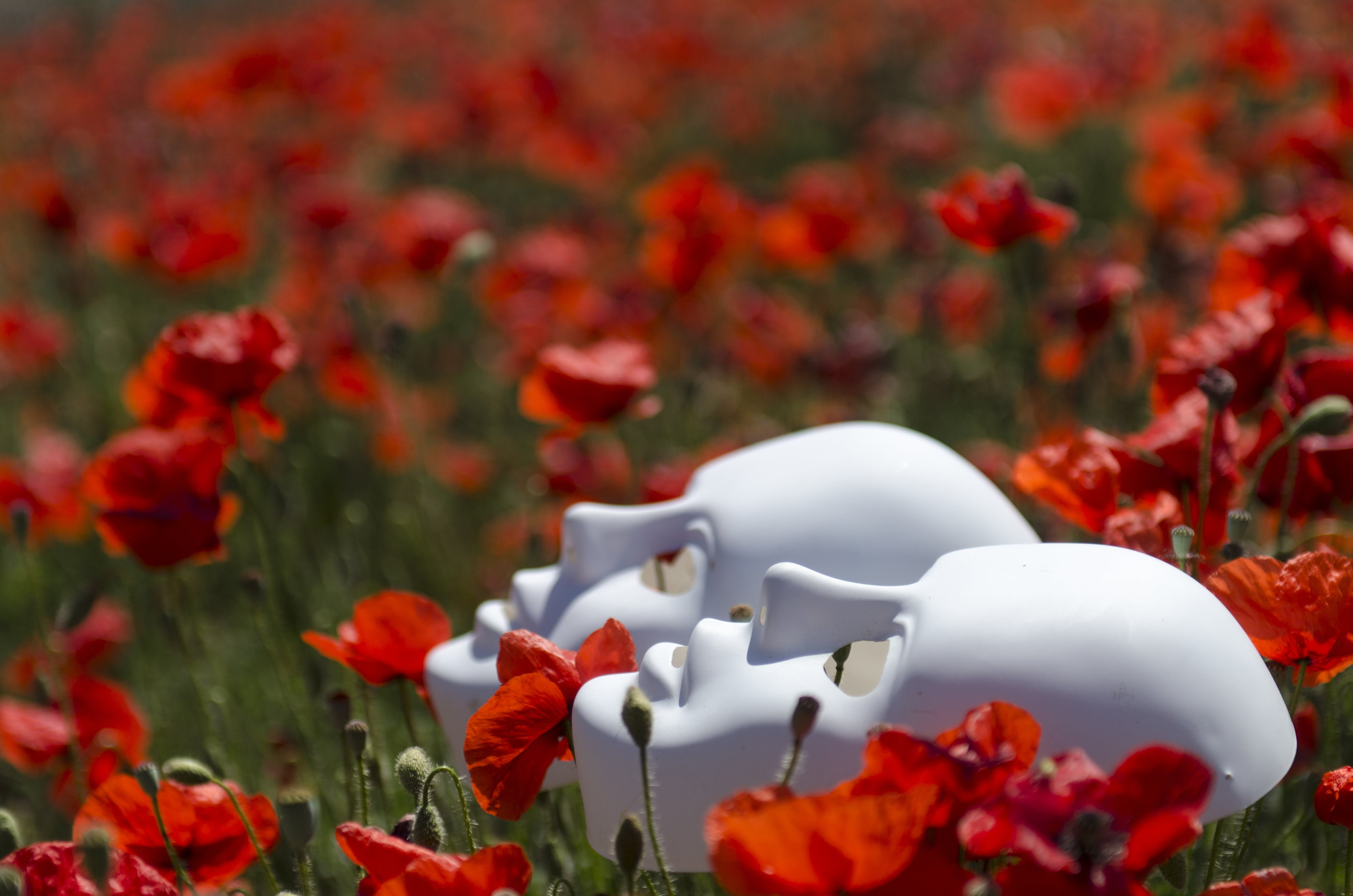 Two White Masks on Red Poppy Flowers