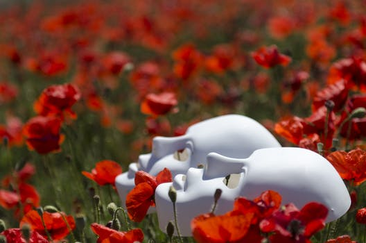 1000 interesting poppy flowers photos pexels free stock photos two white masks on red poppy flowers mightylinksfo