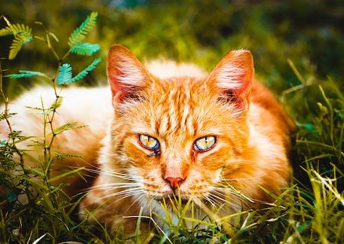 Imagine de stoc gratuită din adorabil, animal, animale, animale adorabile