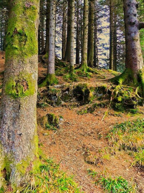 ahşap, doğa, orman, yeşil içeren Ücretsiz stok fotoğraf