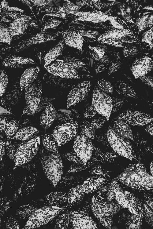 Monochrome Photo Of Leaves