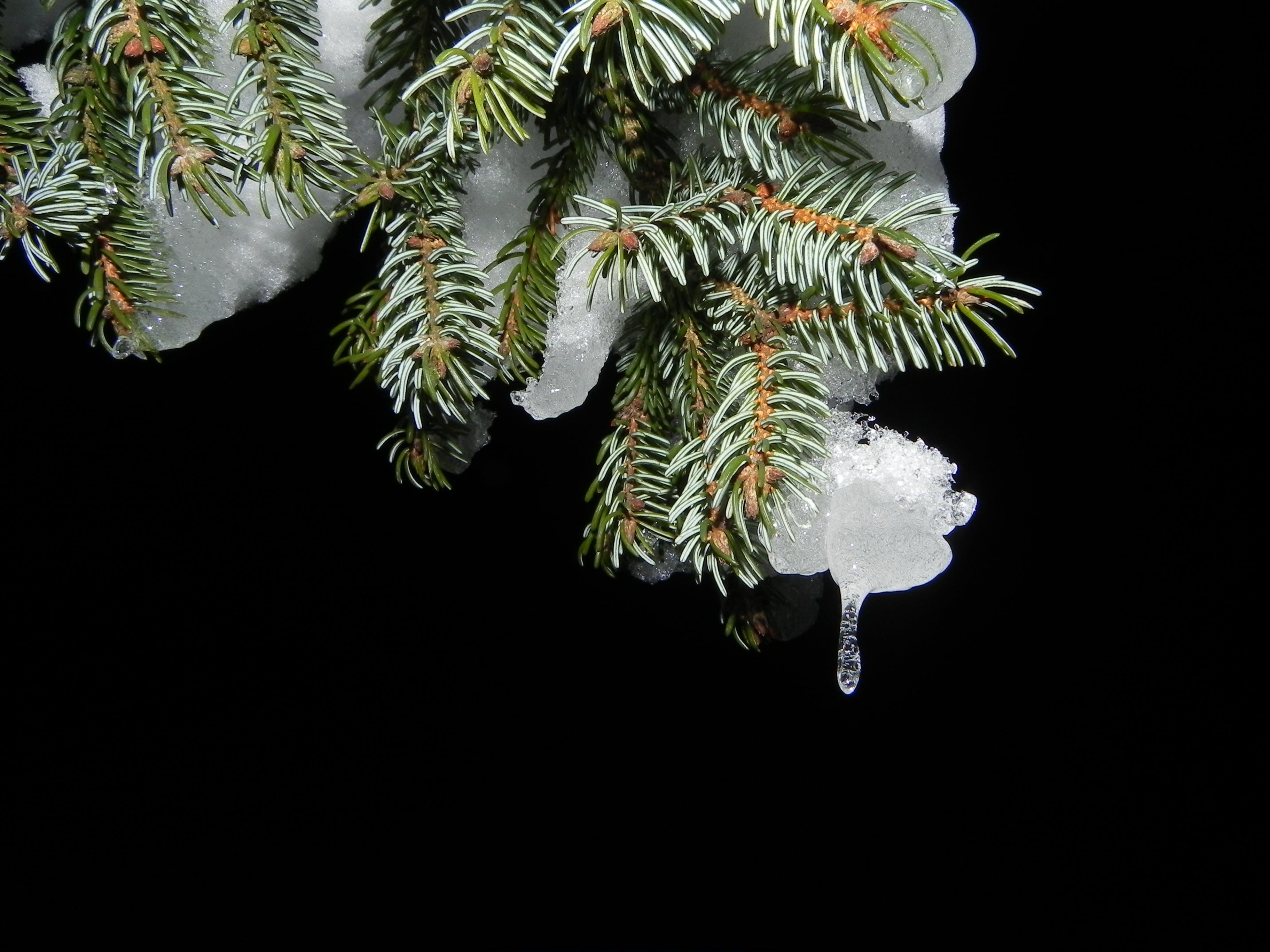 Free stock photo of cold, snow, night, christmas