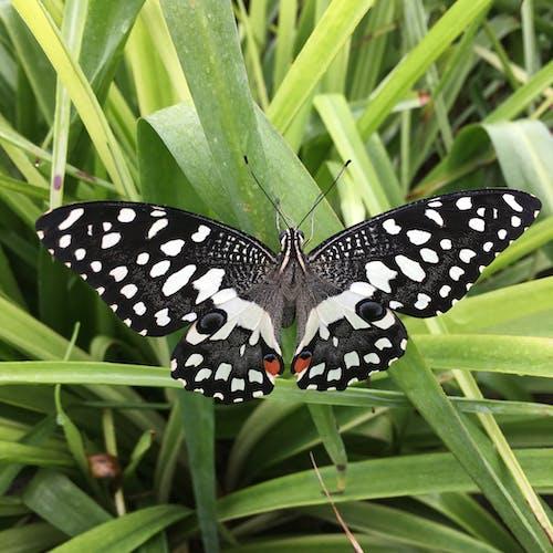 Free stock photo of butterflies, butterfly, butterfly on a flower