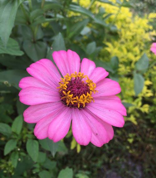 Free stock photo of beautiful flower, giant flower