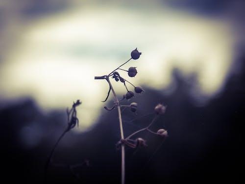 Základová fotografie zdarma na téma kytka, tmavé pozadí, tmavý