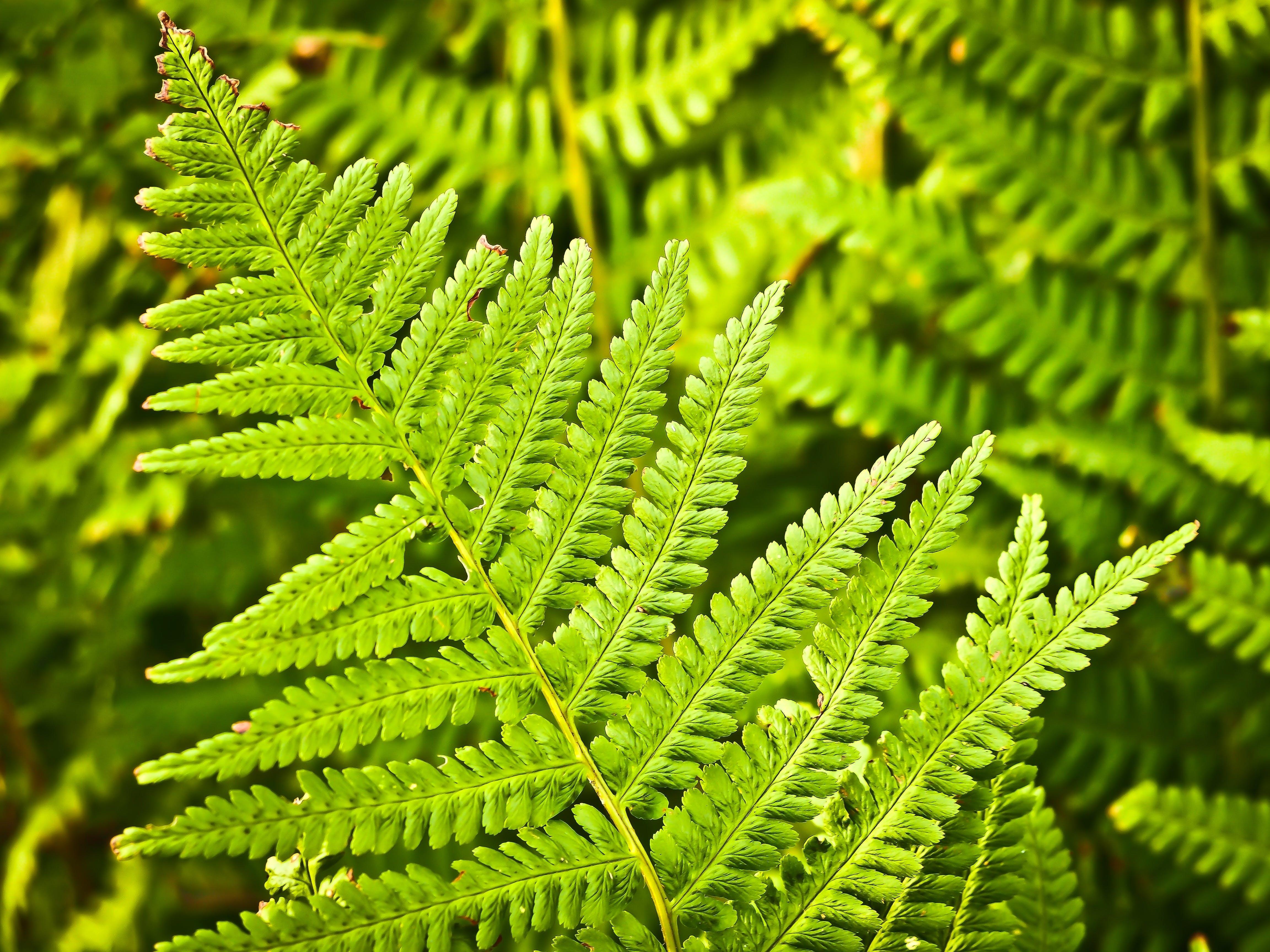 botani, ekosistem, flora