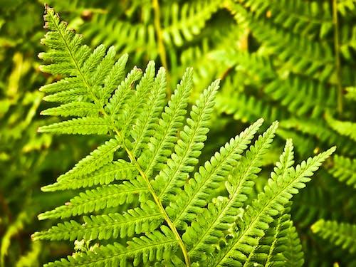 Foto d'estoc gratuïta de bosc, botànica, ecosistema, flora