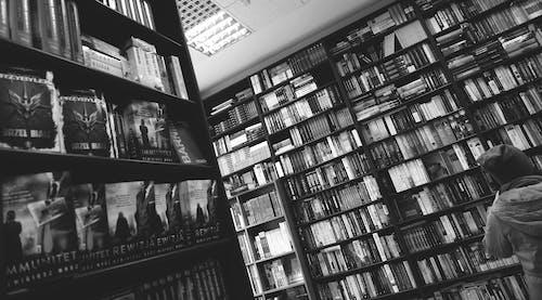 インドア, 人, 図書館, 学校の無料の写真素材