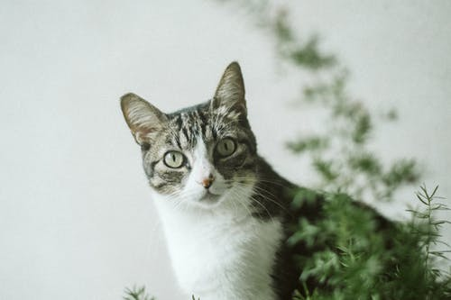 Photo Of Cat Beside Plant