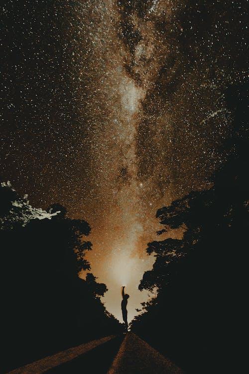 밤, 별, 실루엣, 어두운의 무료 스톡 사진