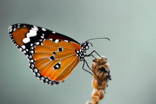 Close-Up Photo of Butterfly