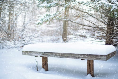 Free stock photo of background, bench, cold, forest
