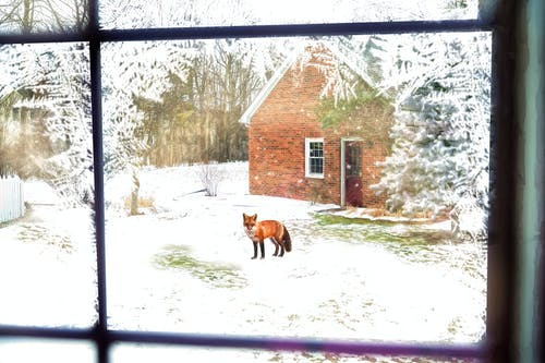 Free stock photo of fox, house, landscape, scene