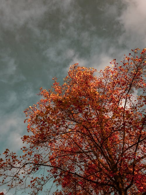 Brown Leaf Tree Under Cloudy Sky
