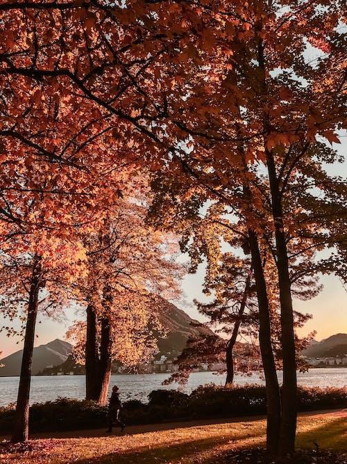 Kostenloses Stock Foto zu äste, bäume, draußen, farben des herbstes