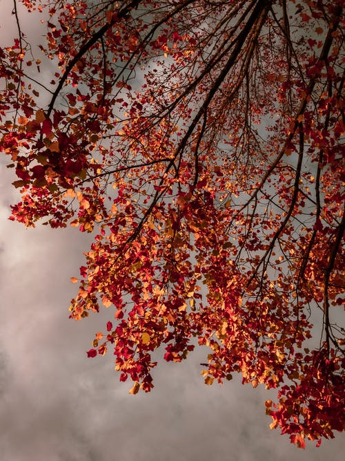 Brown Leaves on Tree Under Cloudy Sky